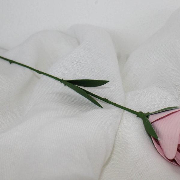 rosarosa
