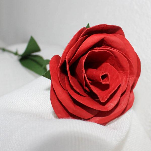rosavermella4
